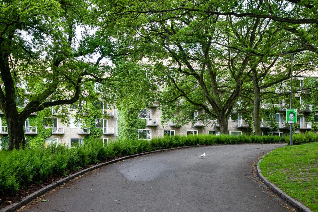 Strada circondata dal verde nel quartiere universitario