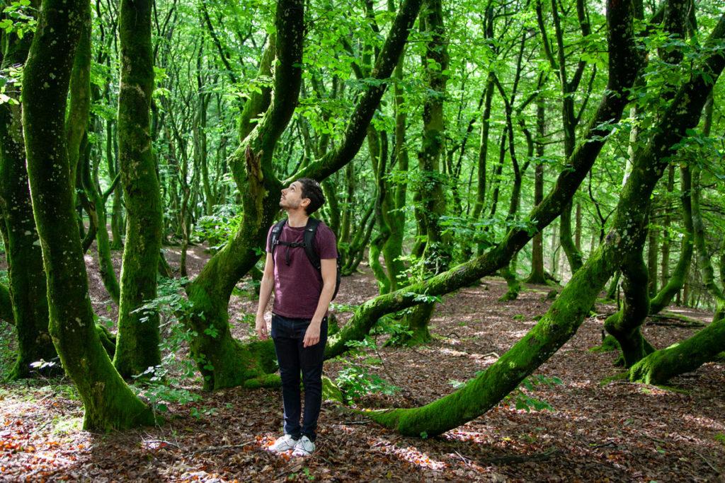 Trekking dentro alla foresta Rold Skov - Foresta più grande della Danimarca