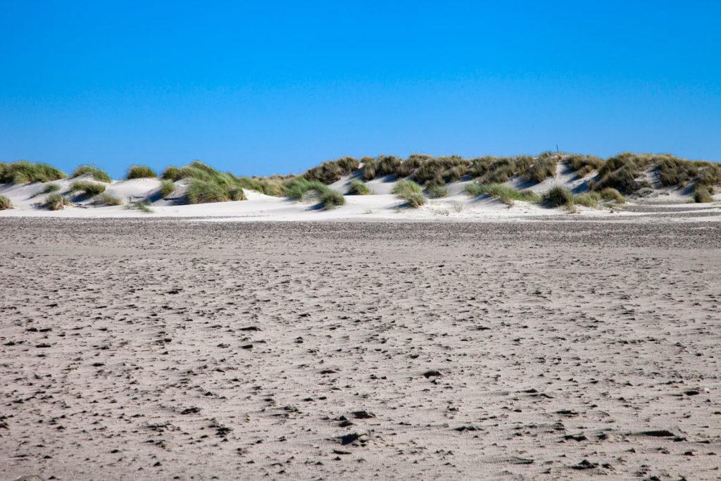 Vento e dune nella spiagga di Grenen - Natura di Skagen