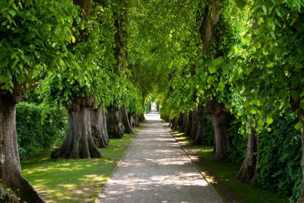 Viale Alberato verso il giardino Riposante e il labirinto settecentsco