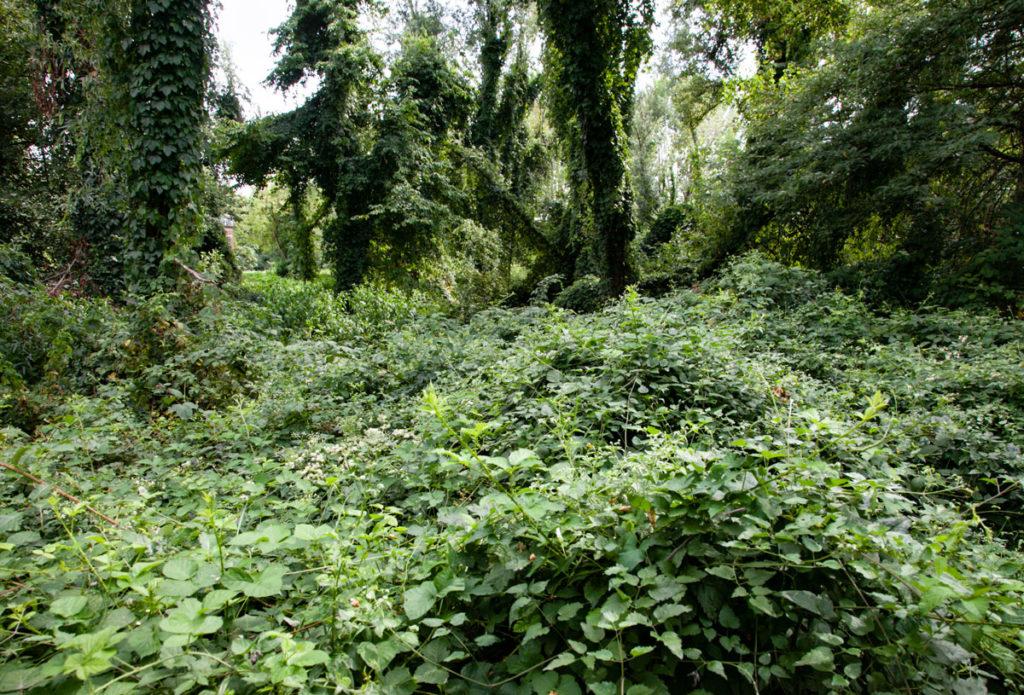 Aree boschive nella natura milanese