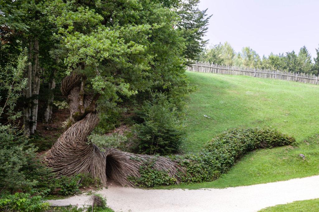 Attraversare l'Anima - Bruco di rami che si arrampica su albero