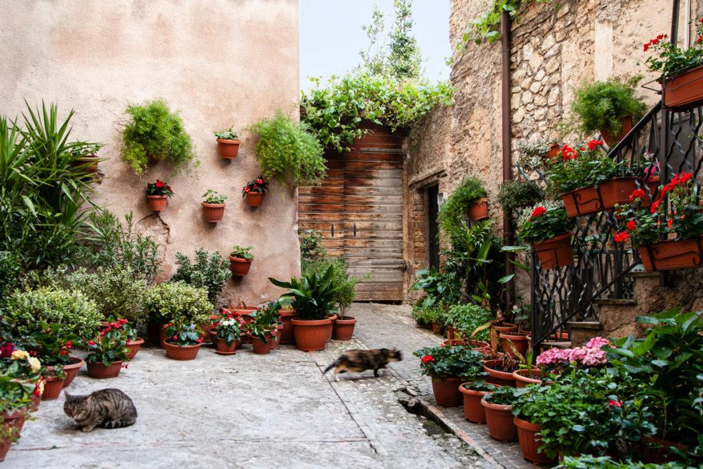 Gatti e Vegetazione di Trevi tra Pietre e Vasi