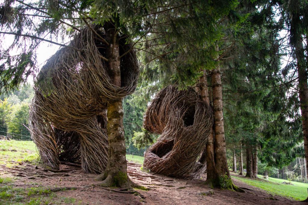 Le tane degli alberi di Arte Sella