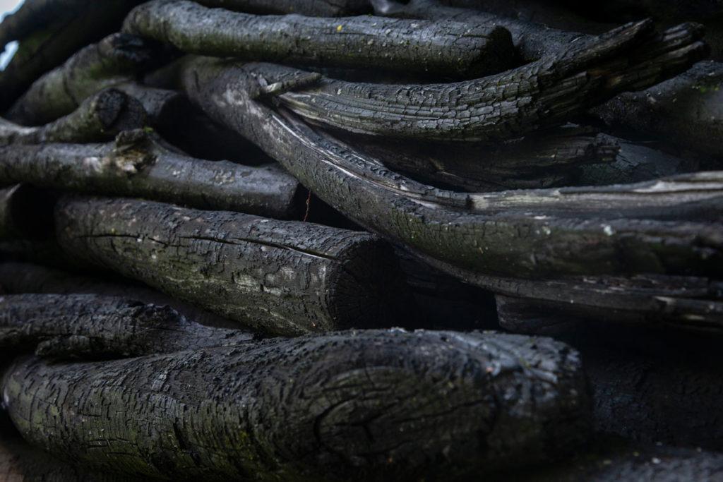 Legni Bruciati di Arte Sella - Il Seme di Alison Stigora