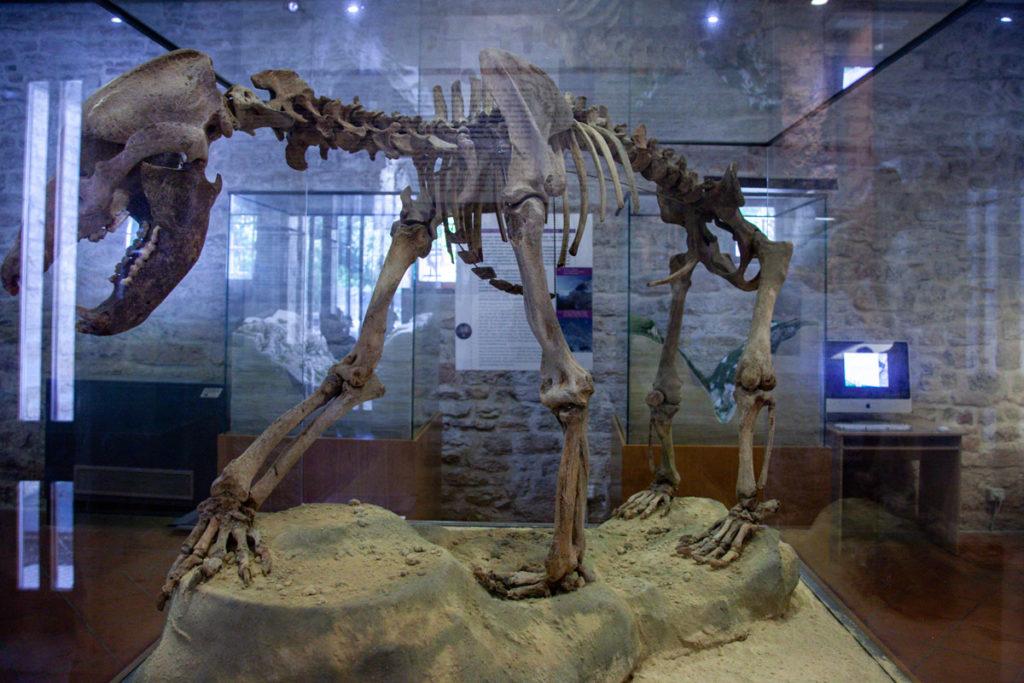 Museo Speleogico - Scheletro di Orso