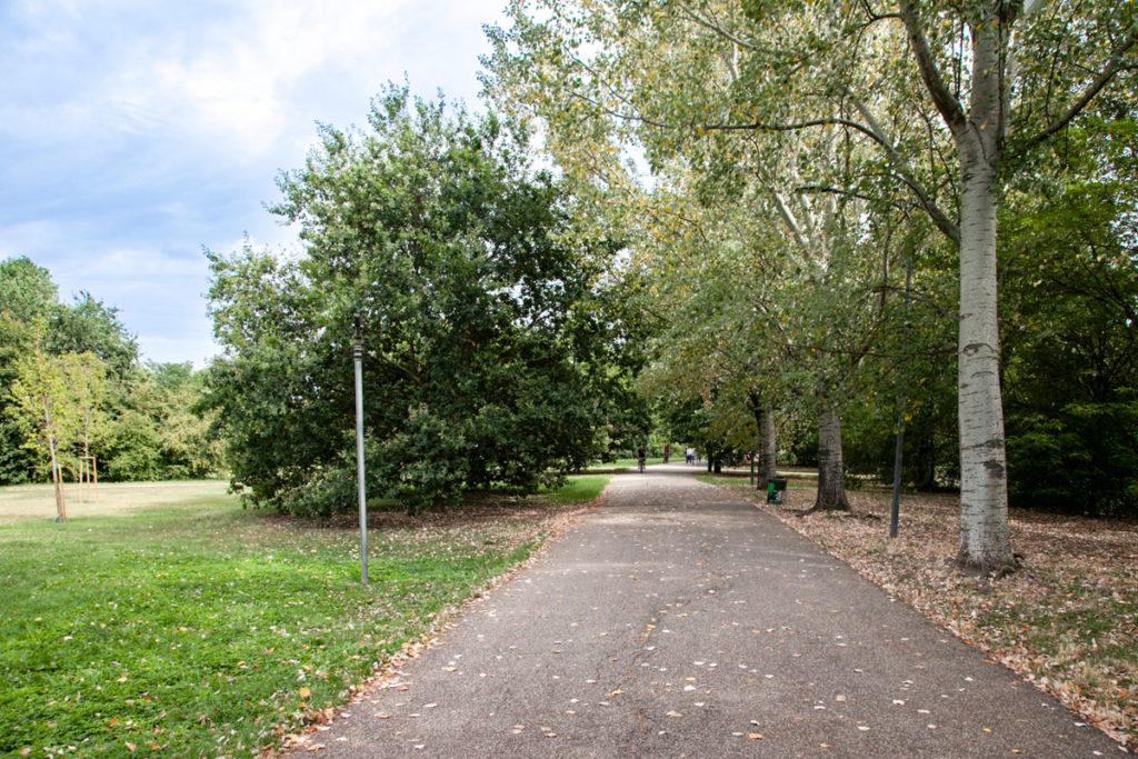 Natura e alberi nel verde del parco