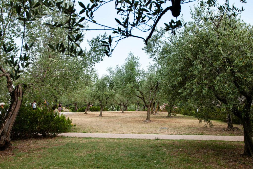 Parco pubblico Tomelleri e gli ulivi