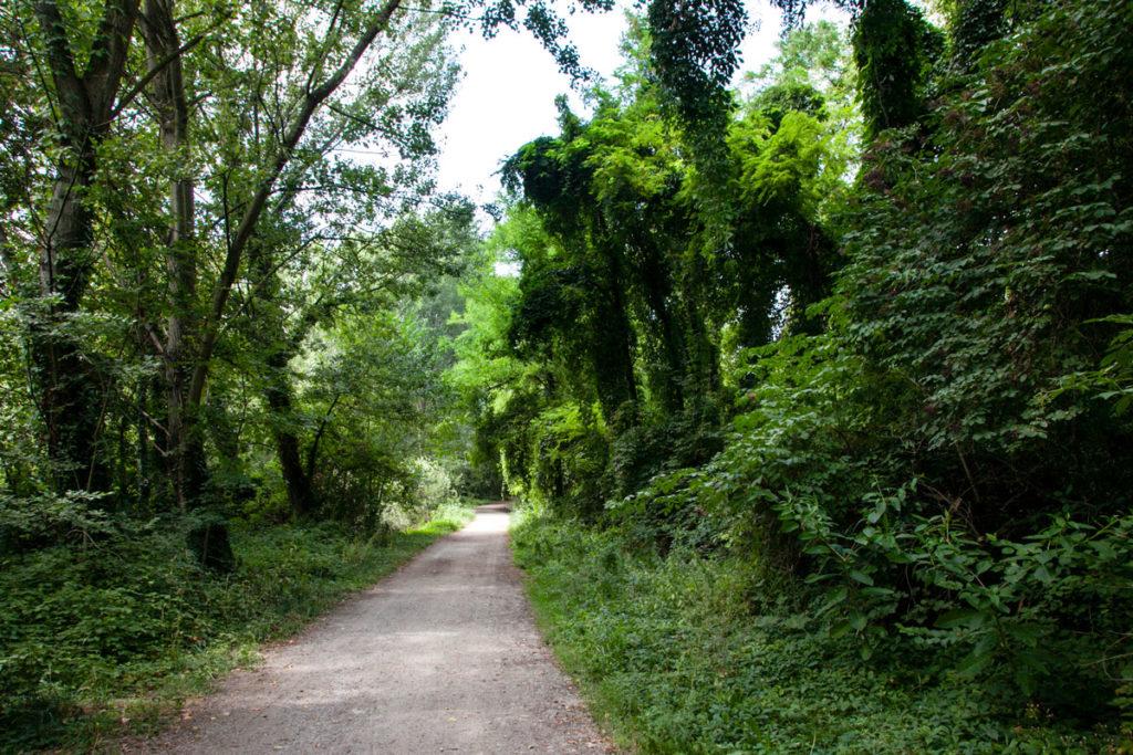 Passeggiata nella natura selvaggia del Parco delle Cave