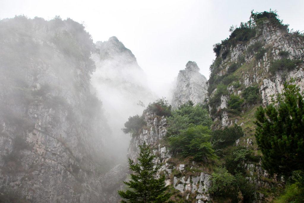 Roccia e vegetazione nel trekking tra la Bocchetta Campiglia e il Rifugio Papa