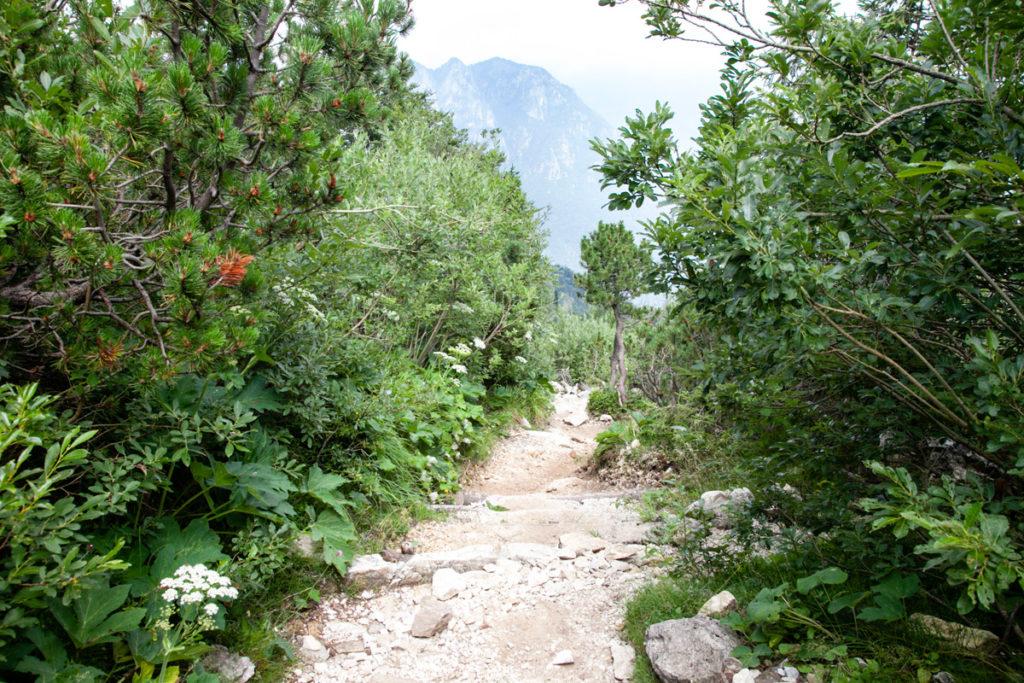 Scorciatoia in mezzo alla natura nella Strada degli Scarubbi