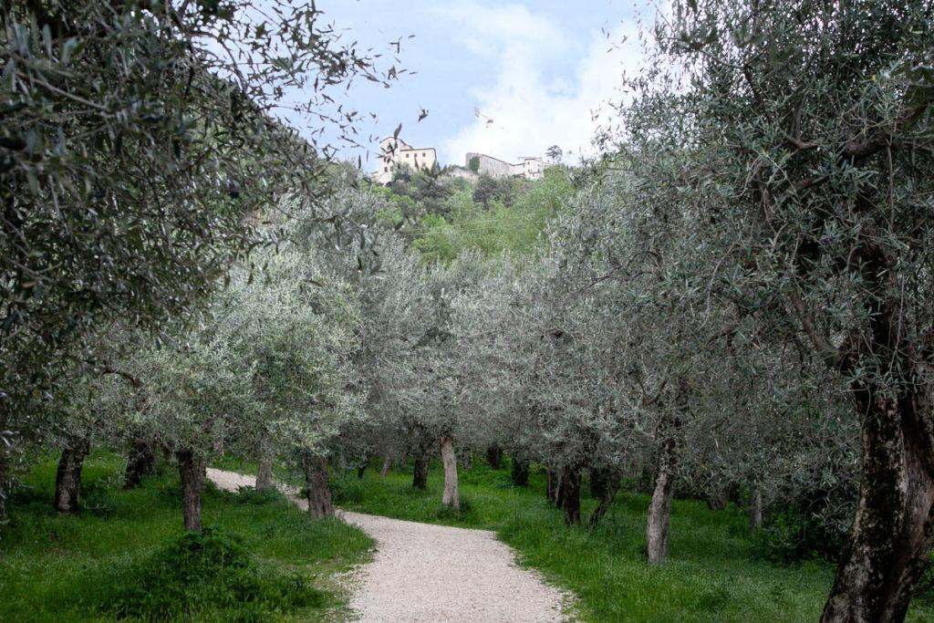 Ulivi e Natura in Umbria