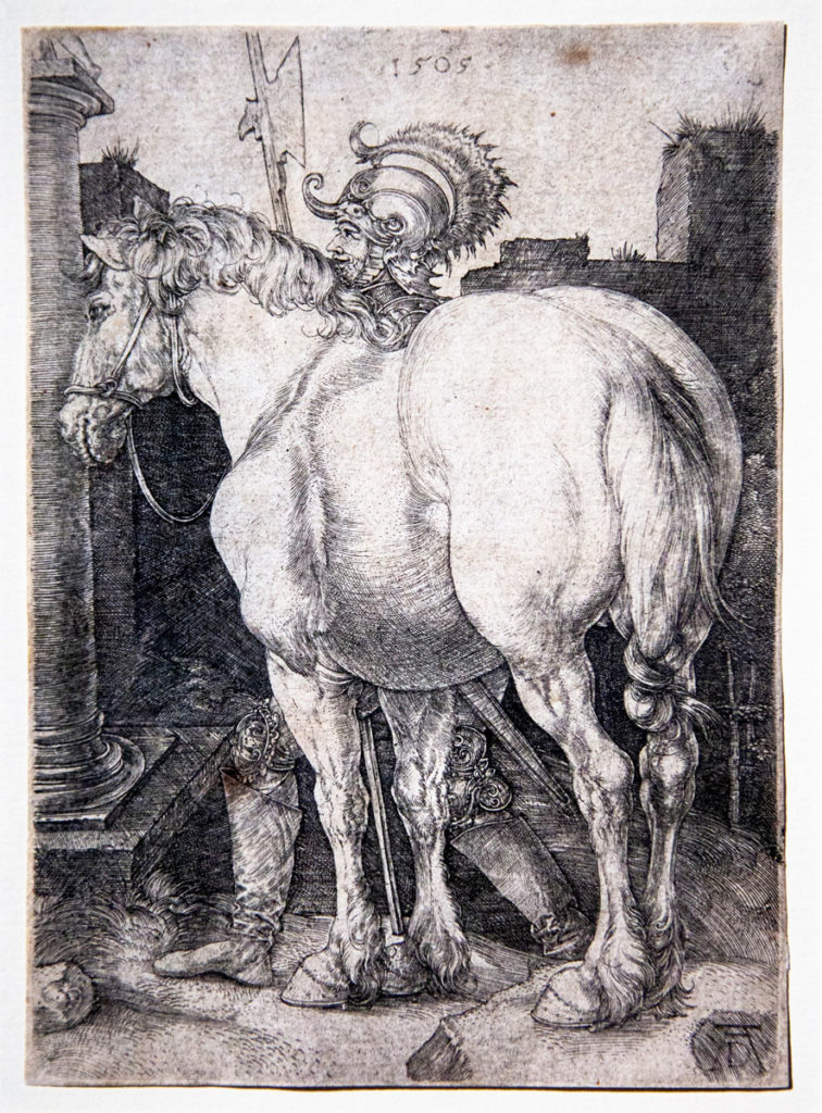 Muscoli dell'animale ne Il Grande Cavallo del 1505 - Albrecht Dürer