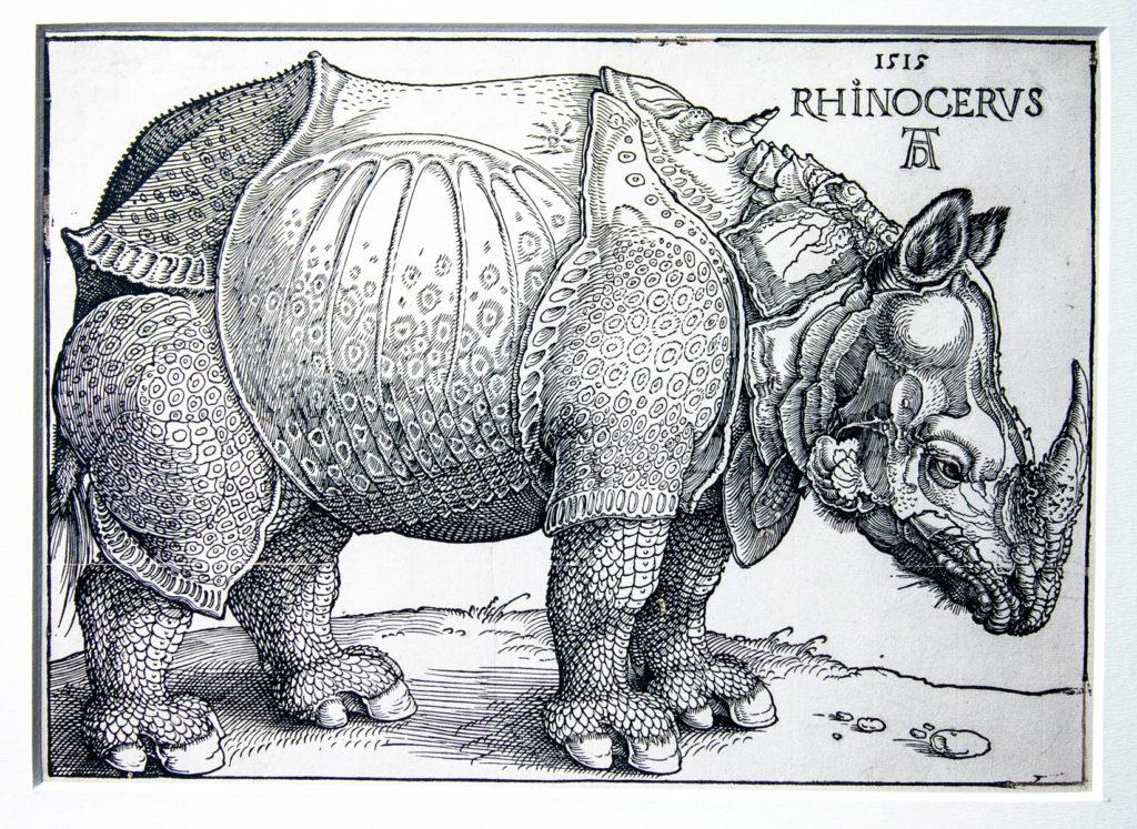 Osservazione della realtà nelle incisioni di Albrecht Dürer - Rinoceronte - Fantasia e texture differenti