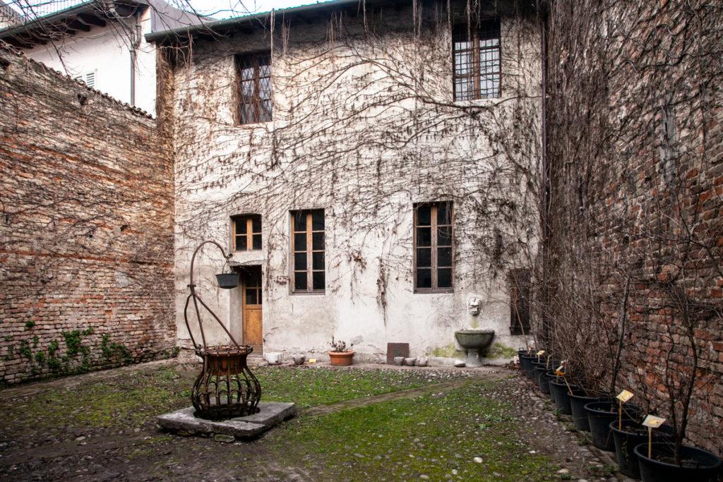 Piante rampicanti nel cortile interno del Museo Civico di Crema e del Cremasco