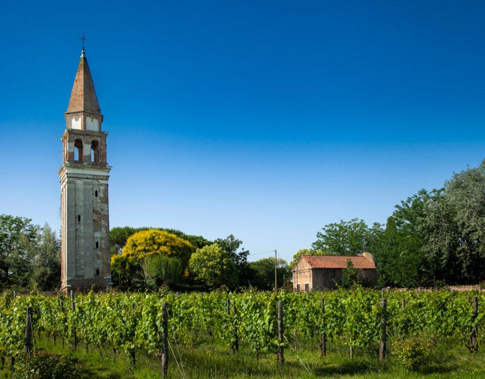 Vigna Murata e Campanile della chiesa di San Michele Arcagelo a Mazzorbo