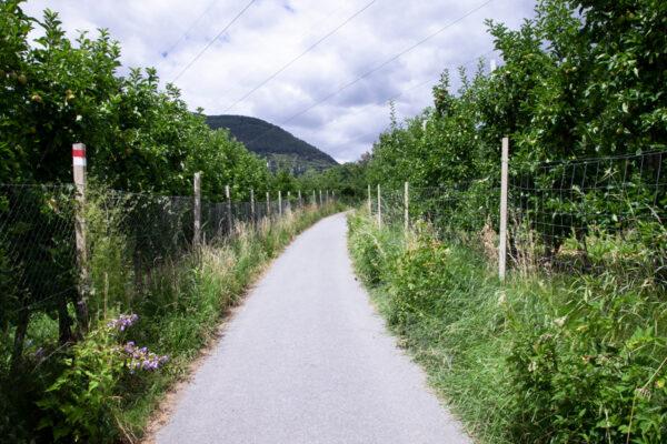 Campi di mele al termine del sentiero delle rogge di Sluderno