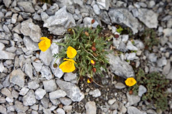 La flora del Parco Nazionale dello Stelvio