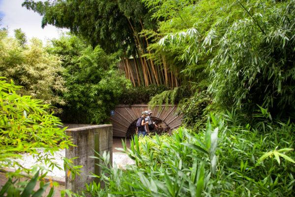 Bosco di Bamboo in Boschi dal Mondo