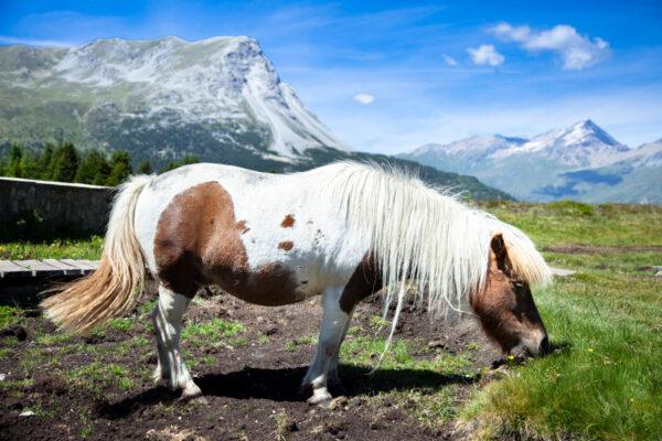 Cavalli che avvicinano i turisti