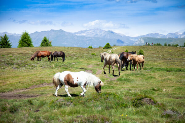 Cavalli incuriositi dai turisti