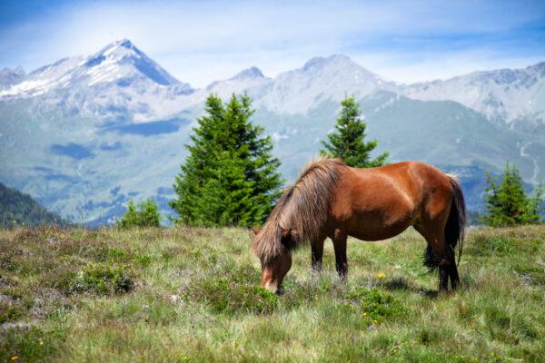 Cavallo libero che pascola sul Pian dei Morti