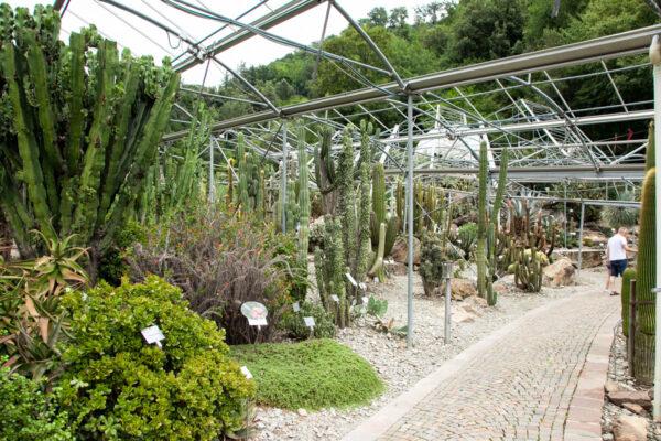 Giardini botanici di Castel Trauttmansdorff - Semideserto a succulente