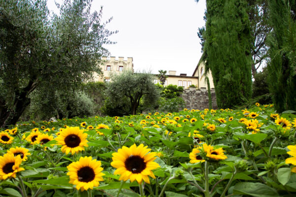 Girasoli nei giardini botanici di Castel Trauttmansdorff