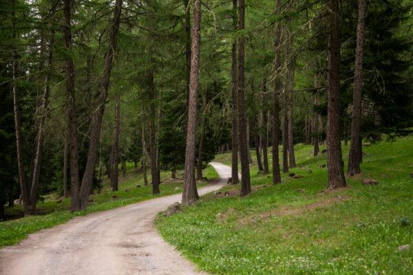 Ingresso nel bosco che conduce al Pian dei Morti