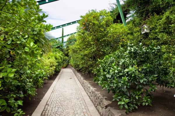 Limonaia e agrumeto nei giardini del sole - Castel Trauttmansdorff