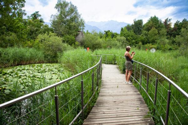 Paesaggi dell'Alto Adige - Vegetazione Lacustre