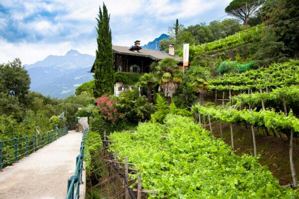 Palme orti e vegetazione lungo la passeggiata Tappeiner