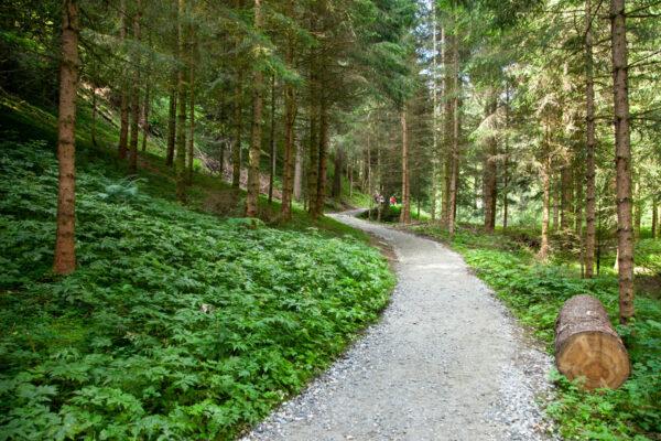 Passeggiata nel bosco verso le cascate di Stanghe