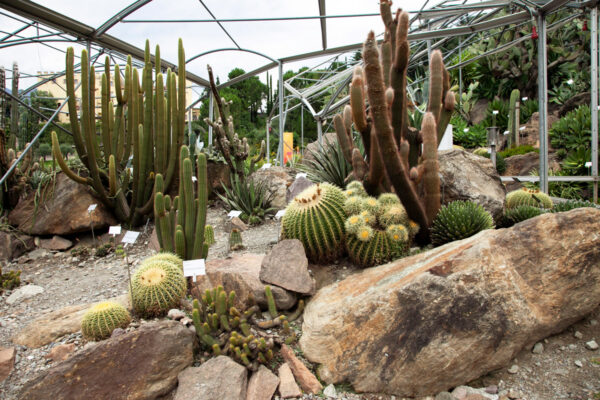 Piante grasse cactus e succulente nei giardini botanici di Castel Trauttmansdorff