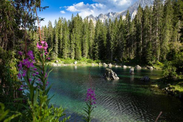 Gli Abeti Rossi che avvolgono il lago di Carezza nella foresta del Latemar