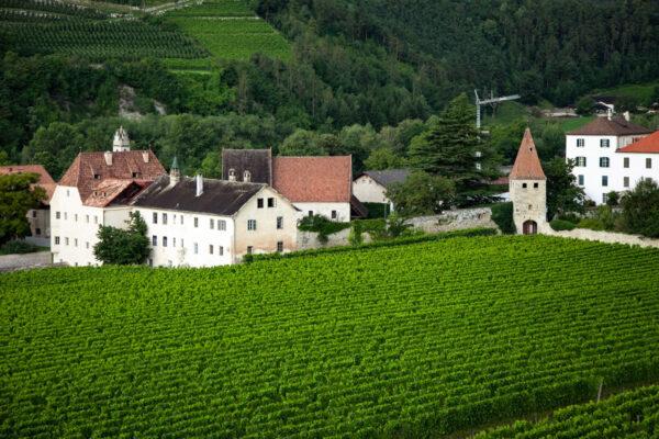 Viti per la produzione dei famosi vini dell'Abbazia di Novacella