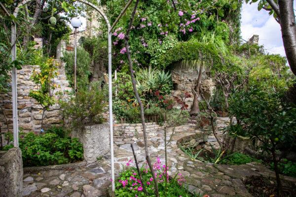 Piante e verdi nel giardino tra i ruderi