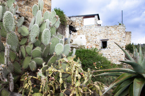 Piante grasse e i resti di case di Bussana Vecchia