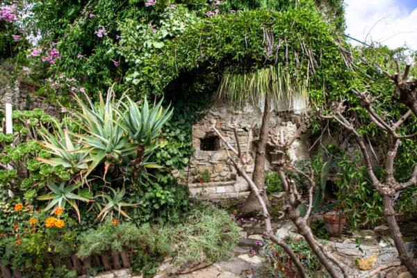 Piante grasse e verde nel giardino botanico sviluppato in verticale