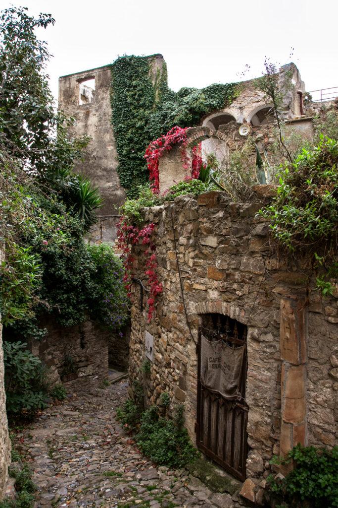Piante rampicanti sui resti delle case del borgo romano