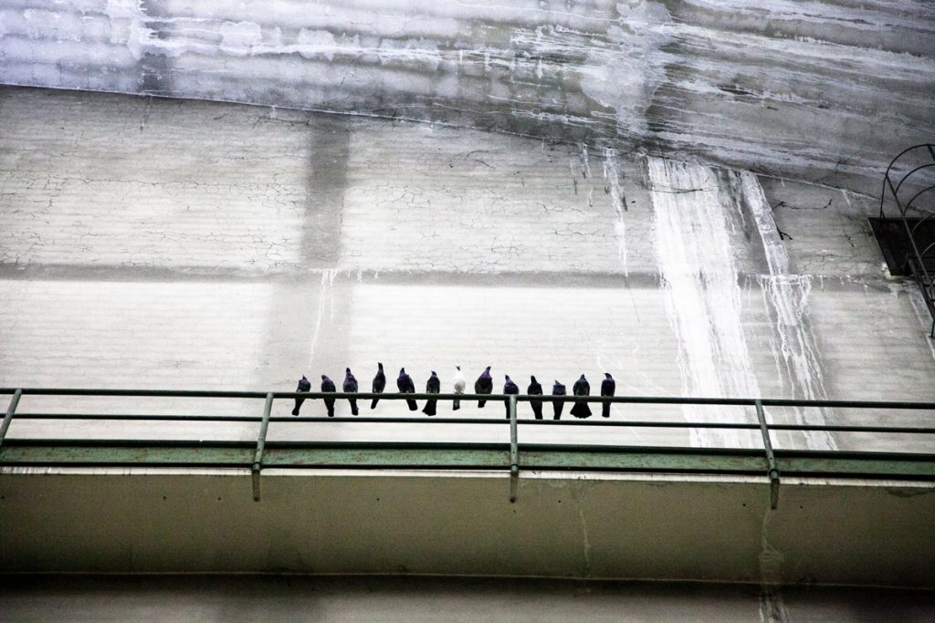 I piccioni di Ghosts nel cubo di Hangar Bicocca - Maurizio Cattelan