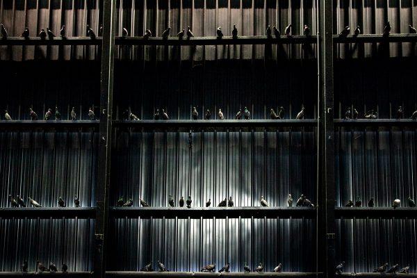 Piccioni in tassidermia sulle navate di Hangar Bicocca - Breath Ghosts Blind di Maurizio Cattelan