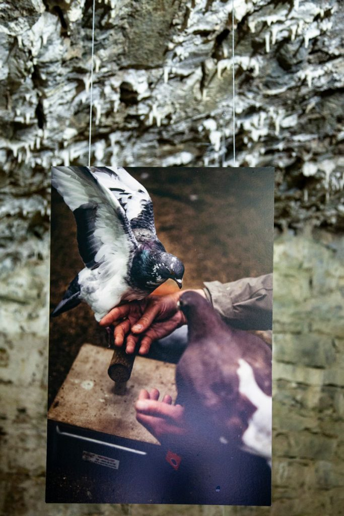 La storia di Tristan Plot - addestratore di uccelli